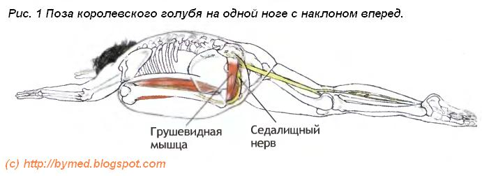 Как расслабить грушевидную мышцу и седалищный нерв