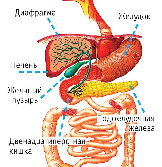 Лечение острого холецистита Симптомы, причины