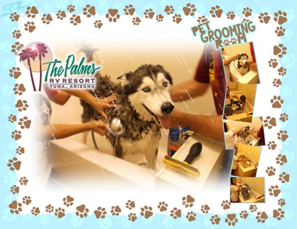 Palms Pet grooming Room