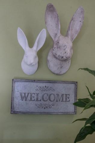 y-rabbit6