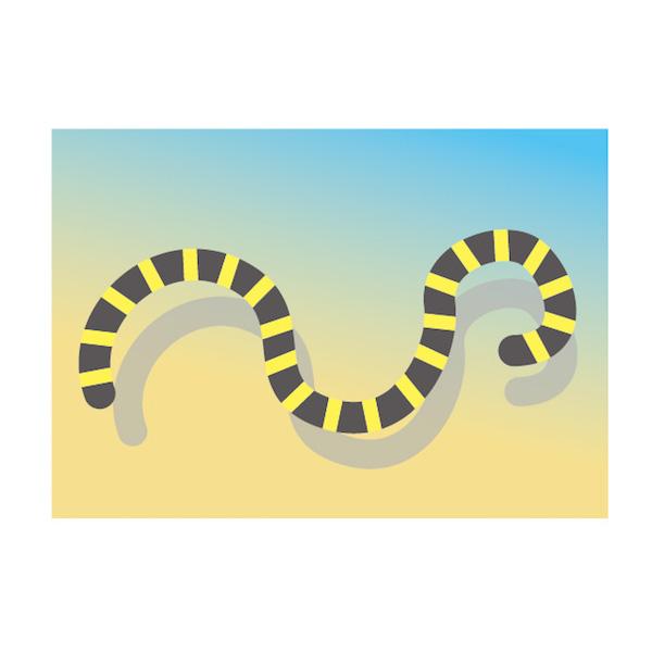 ウミヘビを見る