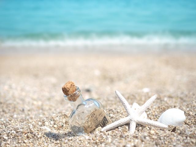 砂浜で貝殻を拾う