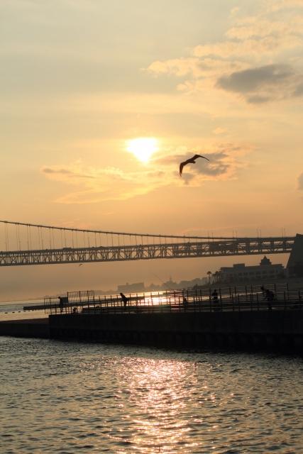 夕焼けに鳥