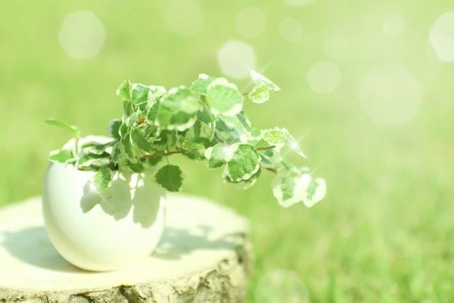 生き生きとして元気な観葉植物