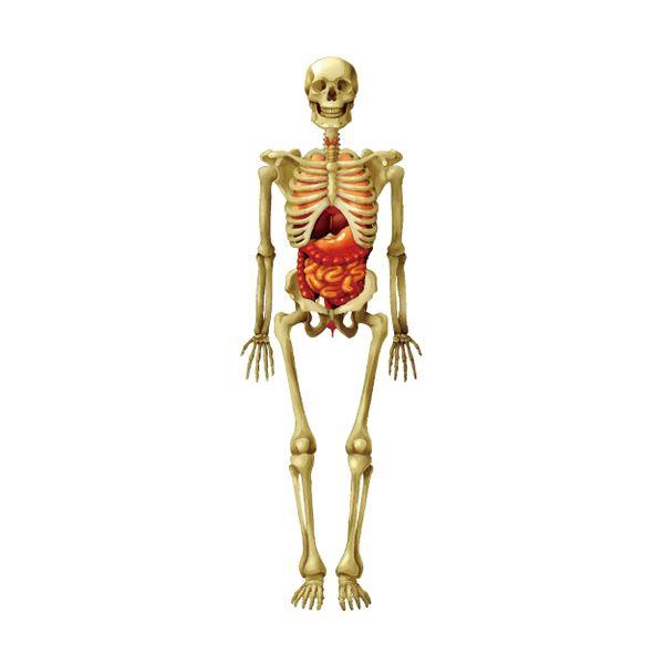 理科室の骸骨を見る