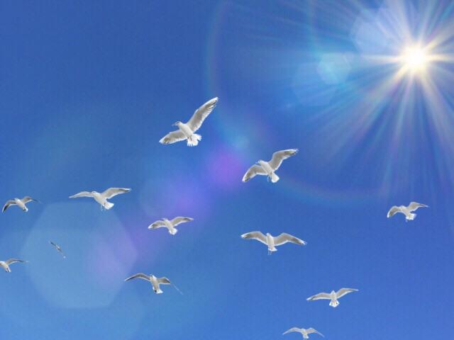 たくさんの鳥が出てくる