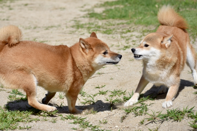犬が2匹いる