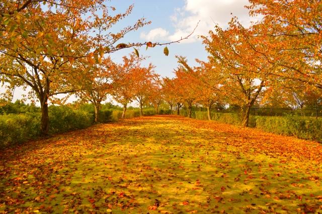 公園で紅葉を見る