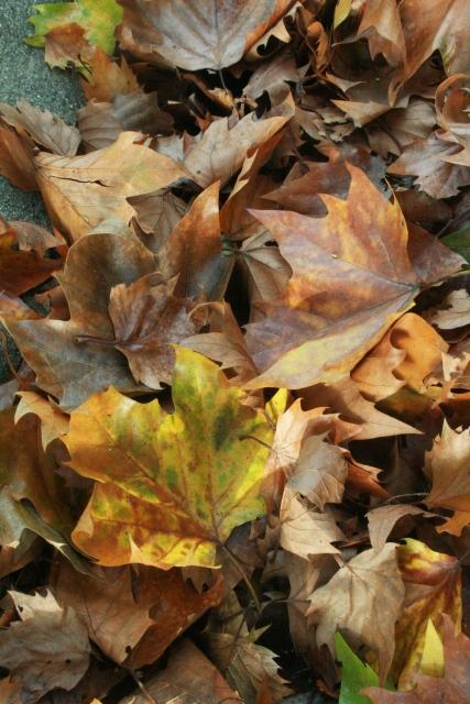 落ち葉で焚火をする