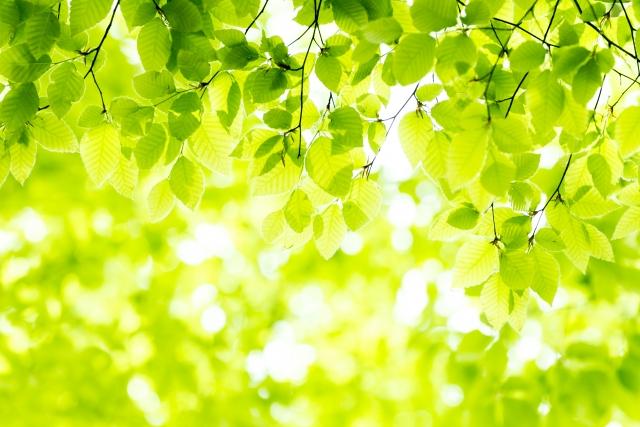 鮮やかな緑色の葉