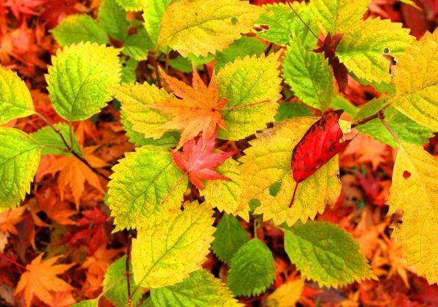 葉が落ちていく