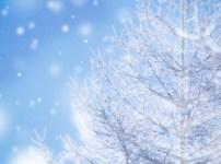 雪が降っている