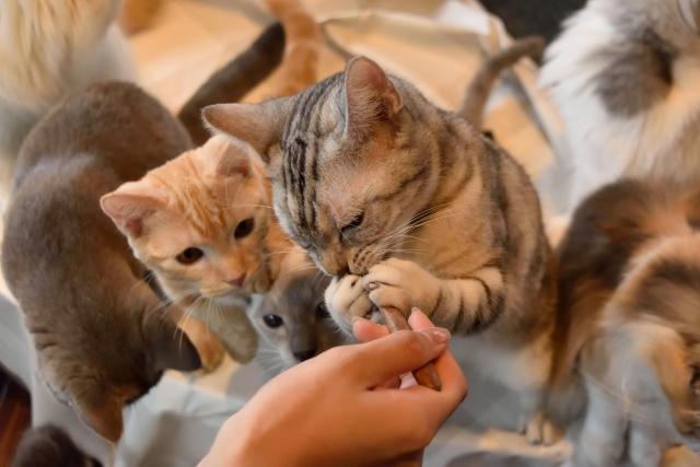 猫に餌をあげる