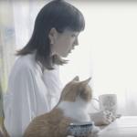 桐谷美玲がワイモバイルCMで踊る曲の名前は?君の瞳に恋してる!