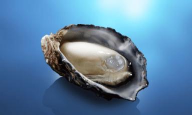 くにさきオイスター絶品牡蠣の購入先や入手方法!食べられる店も!