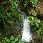 仙元山の渓流