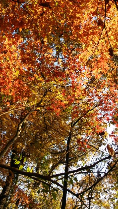 仙元山の紅葉