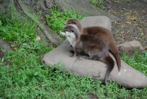 otters-359128_1280