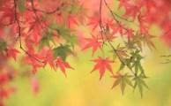 【11月12日生まれ♪】ミラクルを導く☆誕生日別!バースデーアファメーション☆