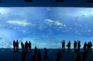 夢占い魚の夢の意味を診断12パターン!魚釣りや熱帯魚等など