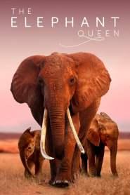 อัศจรรย์ราชินีแห่งช้าง The Elephant Queen (2019)