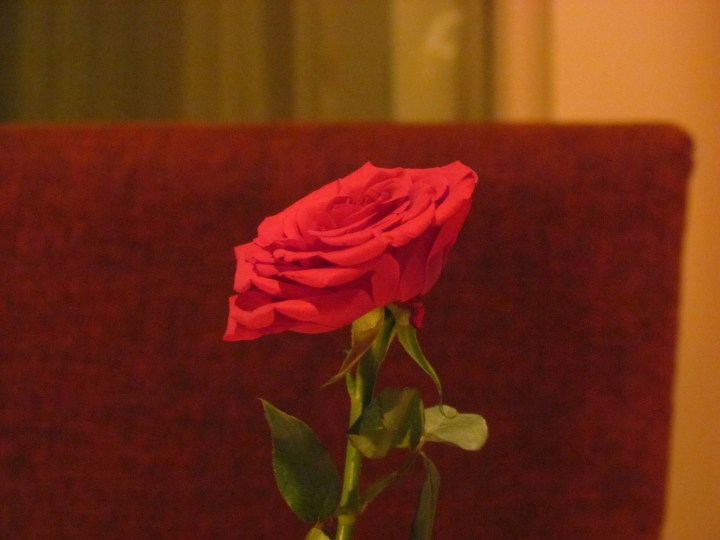 red rose on every table