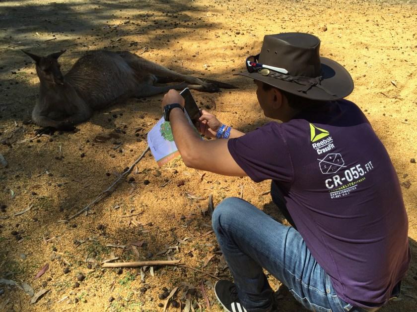 visitor near Kangaroos