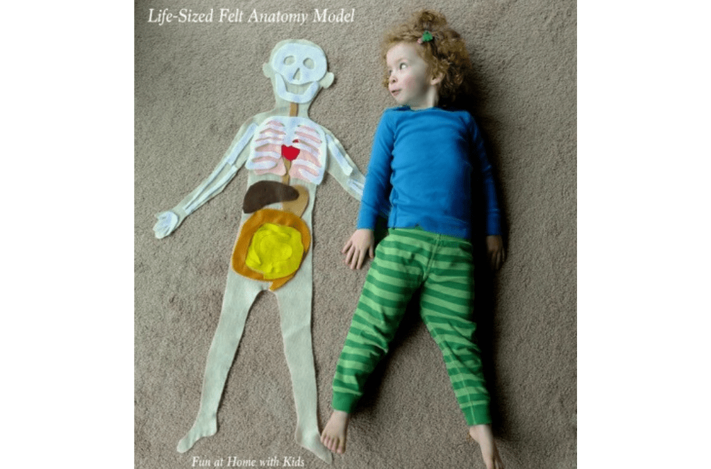 YumNaturals Emporium - Bringing the Wisdom of Mother Nature to Life - Learning About Our Bodies is Fun With Felt