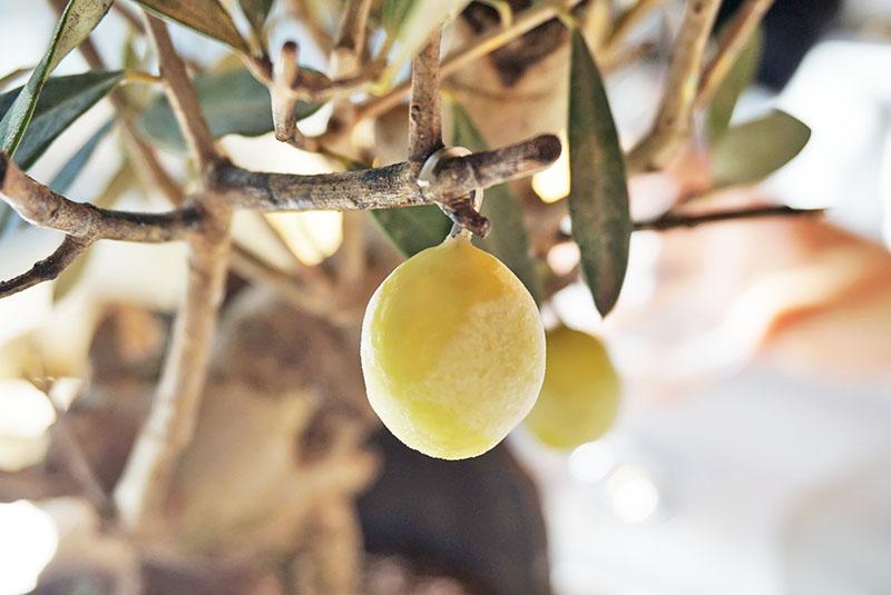 Bonsai de Olivo: Helado de oliva verde. Entrante del Menú Degustación 2019 de El Celler de Can Roca.