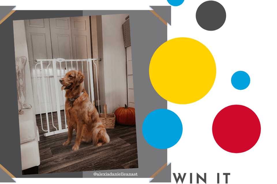 Pet Gate Giveaway