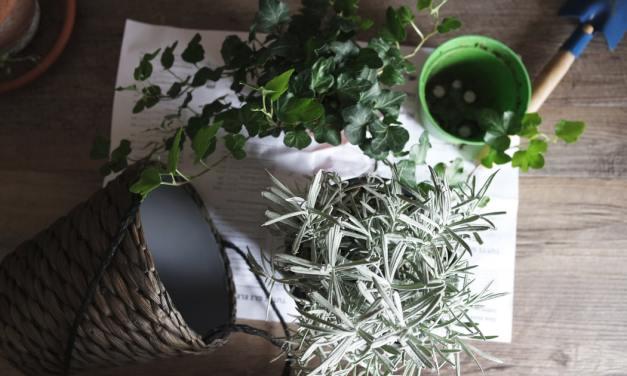 Free Self-Watering Fabric Garden Pot