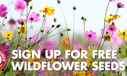 FREE Packet of Wildflower Seeds