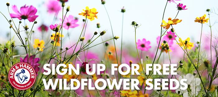 FREE Packet of Wildflower Seeds