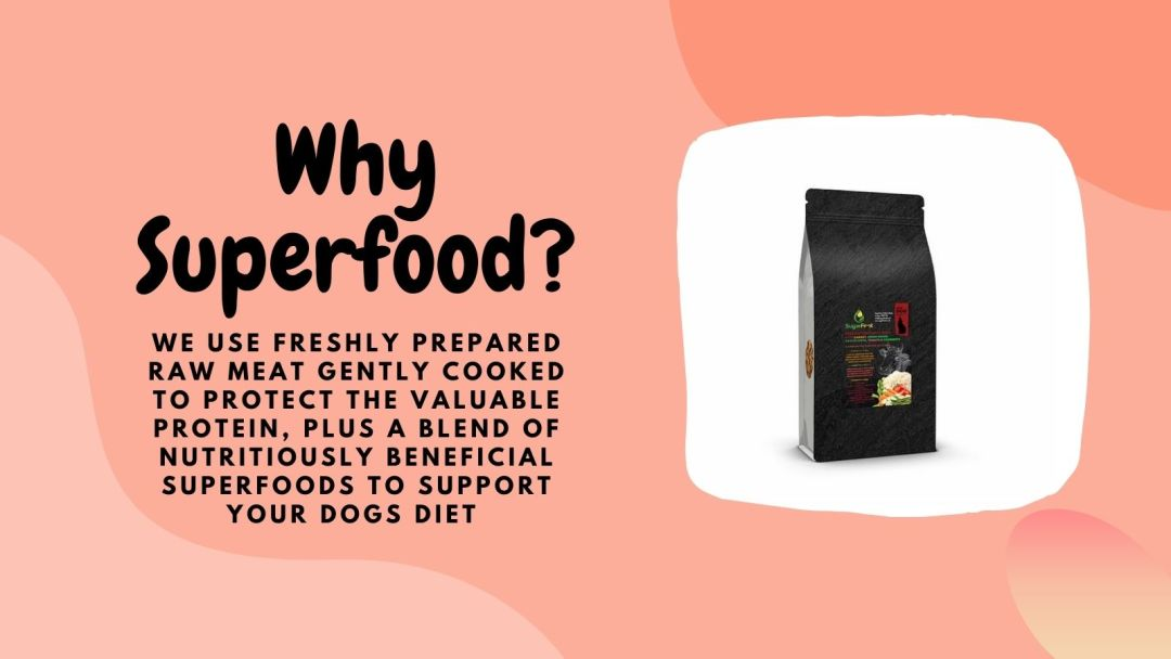 free-dog-or-cat-food-sample