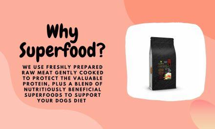 Free Dog Or Cat Food Sample