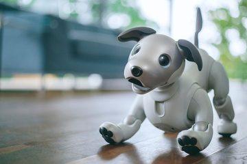 新型アイボの発売日と値段は?可愛らしい外見でペットロボット復活!