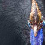 鳥で最強の種はコイツ!オウギワシより遥かに強い○○○トリ
