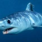 人間を襲う危険な6サメ!どんなサメも人を襲う可能性はある!