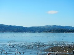 view of Richardson Bay from San Rafael Ave