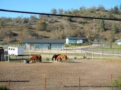 horse ranch on Nacimiento Lake Dr