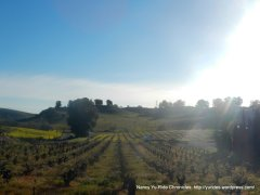 Viano Winery & Vineyards-Martinez