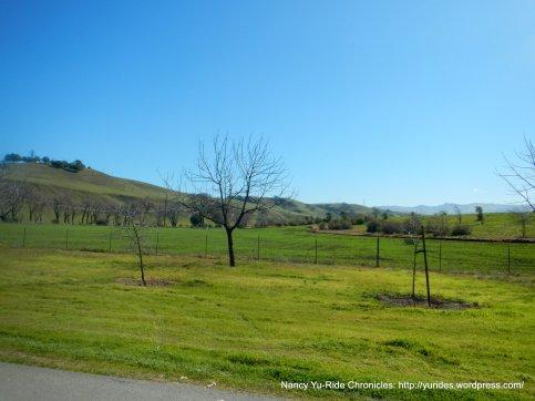 grasslands-Sunol