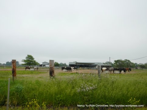 cattle ranch on Willowside