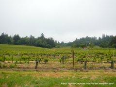 Graton vineyards