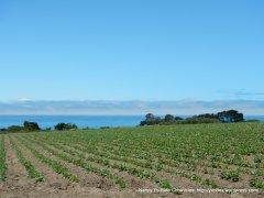farmland & ocean views
