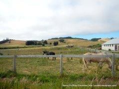 horse ranch on Joy Rd