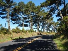 short climb up through the pines