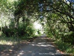 through Samuel P Taylor Park
