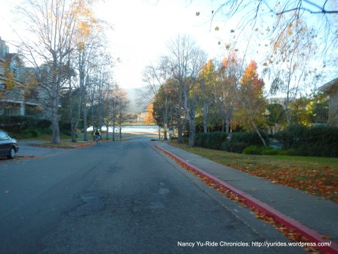 Hamilton Dr some fall colors