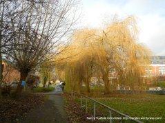 gorgeous willow